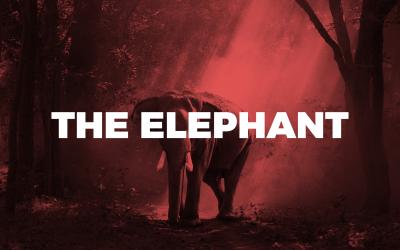 05. The Elephant